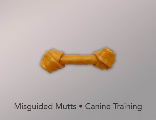 Misguided Mutts • Canine Training